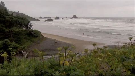 portland man bitten by shark while surfing off oregon