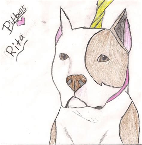 how to a pitbull how to draw a pitbull more like this 2 comments puppy drawing litle pups