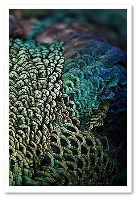 feather tattoo bali 216 best images about designer inspiration on pinterest