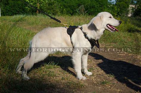 golden retriever harness golden retriever puppy harness for sale