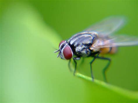 film larva bau mulut bhokalor 2010 4 hewan menjengkelkan tapi bermanfaat bagi