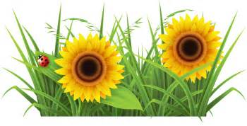 Floers Sunflower Background Png Images