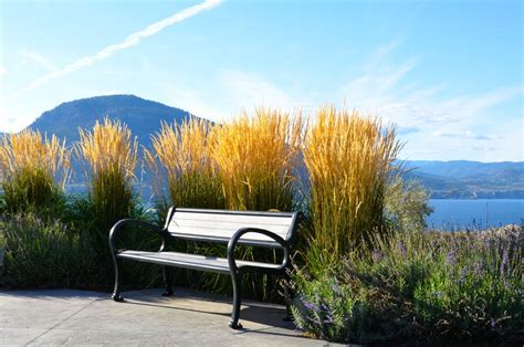 the bench penticton 100 the bench penticton winery u0026 real estate