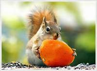 Wild Animals Images Cute Squirrels Wallpaper And Background Photos