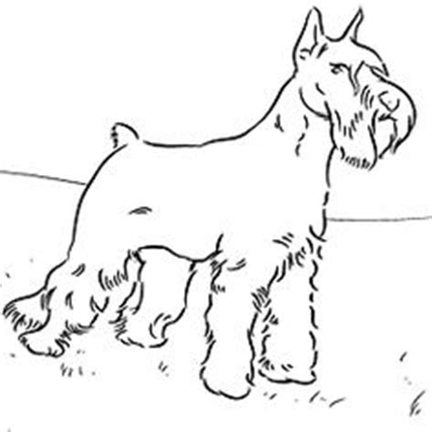 rottweiler puppy favorite dog colouring pages