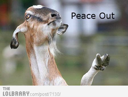 Peace Out Memes - peace out dog on imgfave