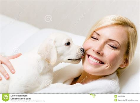 dog licks couch puppy of labrador licking the face of woman royalty free