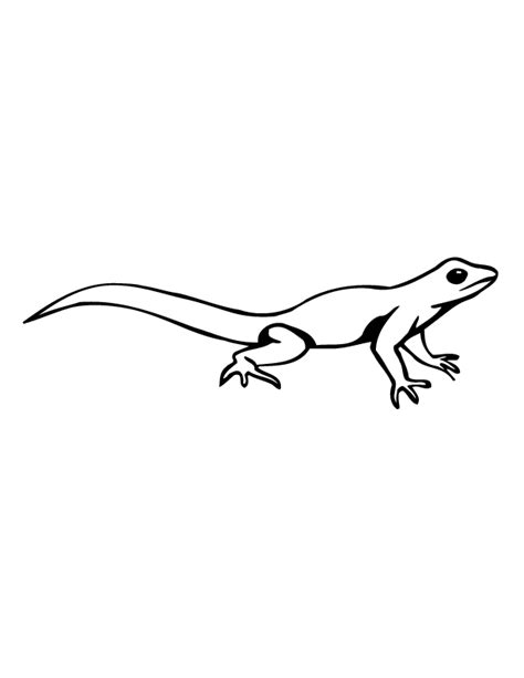 big lizard coloring page lizard color pages coloring home