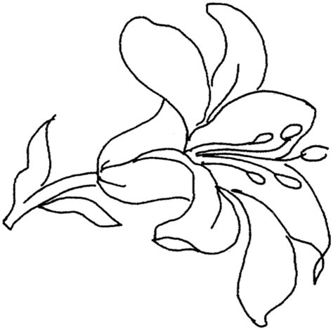 tiger lily coloring page lily 15 coloring page supercoloring com