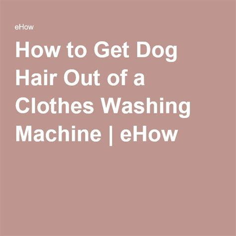 how to get hair clothes 1000 ideas about cleaning hair on remove pet hair antler chews