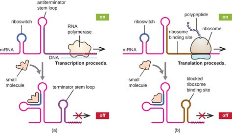 many rna molecules from eukaryotic genes have sections called other factors affecting gene expression in prokaryotes and