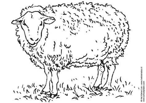 imagenes de ovejas faciles para dibujar dibujo para colorear oveja img 3741