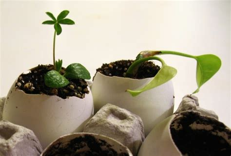 Eggshell Planters discover and save creative ideas