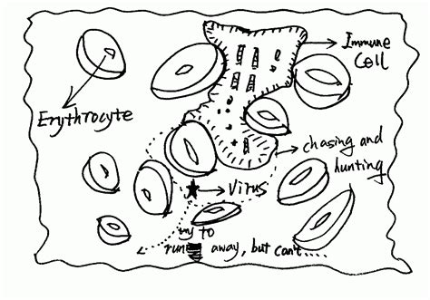 plant cell coloring plant cell coloring pages coloring home