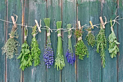 how to dry herbs harvest to table