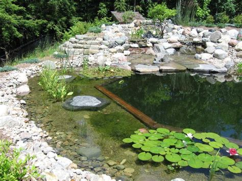 natural pools natural pool no chemicals garden features pinterest