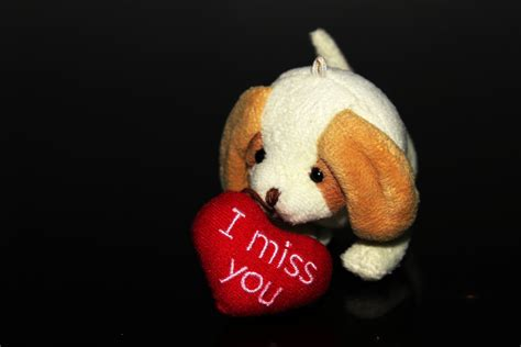 i miss you puppy i miss you with puppy free stock photo domain pictures