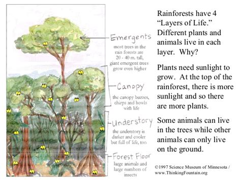 introduction to rainforests