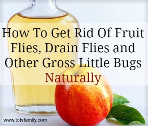 how to get rid of fruit flies and drain flies naturally