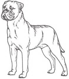 adilt mastiff coloring pages sketch template