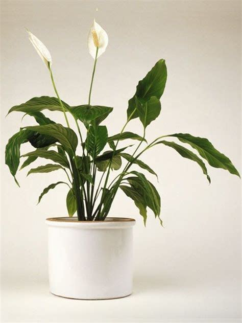 easy house plants 15 easy indoor house plants that won t die on you