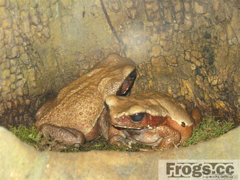 how to find frogs in your backyard how to find frogs in your backyard 100 how to find a frog