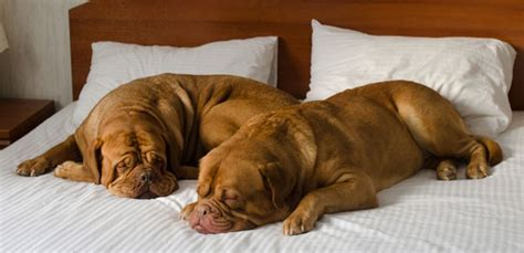 motels that allow dogs 14 friendly hotels and motels to stay at this season