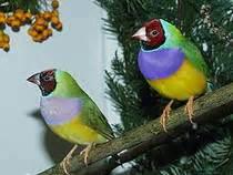 botanischer garten berlin vogelausstellung botanischer garten und botanisches museum berlin dahlem