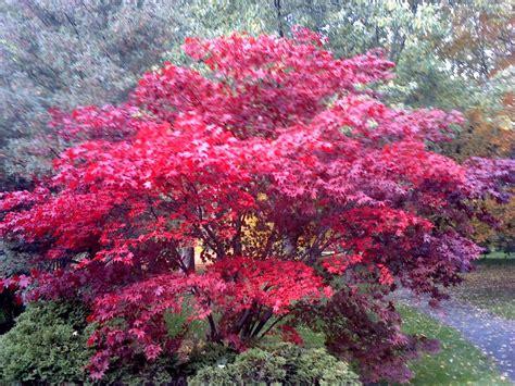 pretty pretty pretty tree by nina1410 on deviantart
