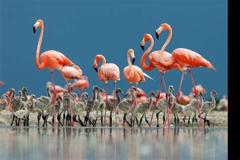 Bfs Big Flamingo 2014 winners gallery