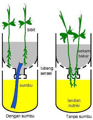 Pipa Bekas Hidroponik cara menanam kangkung hidroponik dengan botol bekas daun ijo