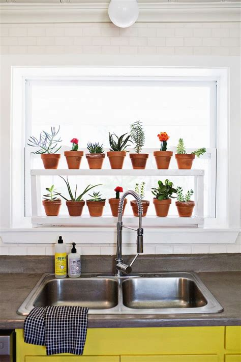 window ledge plant shelf indoor plants