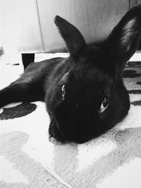 Cute Rabbit Photos | Funny Bunny Videos | Bunny Blog
