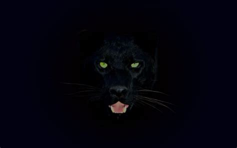 black jaguar wallpapers wallpaper cave