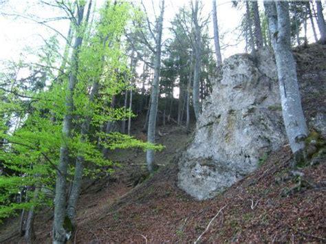 Darf Ich In Meinem Wald Eine Hütte Bauen by Eichhorn