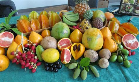 Simple Search Florida Picture Sunday A Winter Harvest In Florida Root Simple