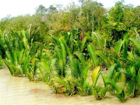 sundarbantours travel to nature with care gallery sundarbantours