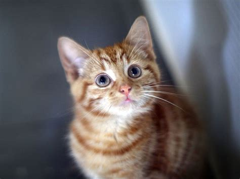 Kuas Cat 3in cat experts reveal the meaning different meows the independent