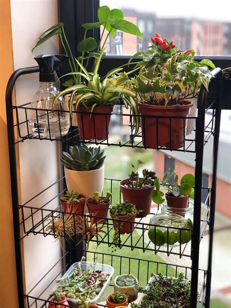 starting  indoor garden connecting east medium