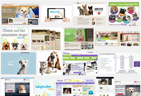 puppy adoption websites shelters and rescues should use pet adoption websites