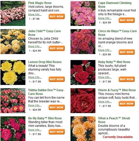 comforts meaning flowers in nanopics birth flowers and their meanings