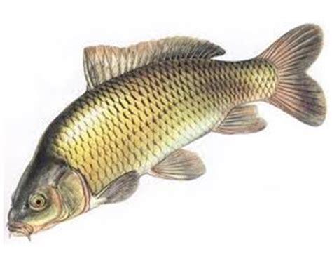 Lemari Es Ikan kumpulan umpan lele jilid 2