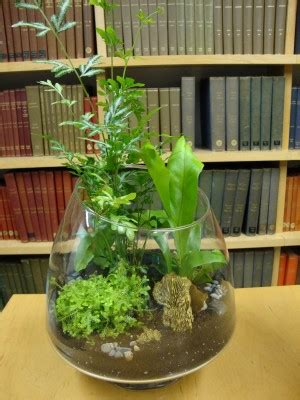 gardening in a bottle 8 edible plants you can grow in an indoor terrarium off the grid news