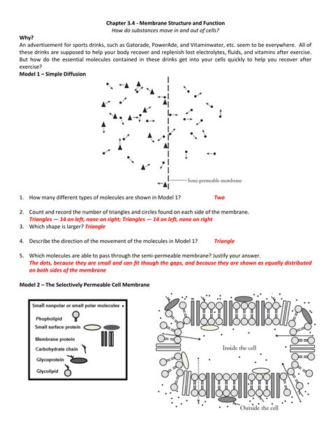 cell membrane structure  function worksheet  cell