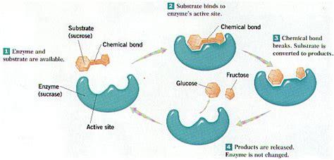 chemistry  organisms biology junction