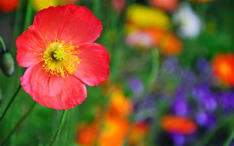 hd themes of flowers high resolution flower themes background frame