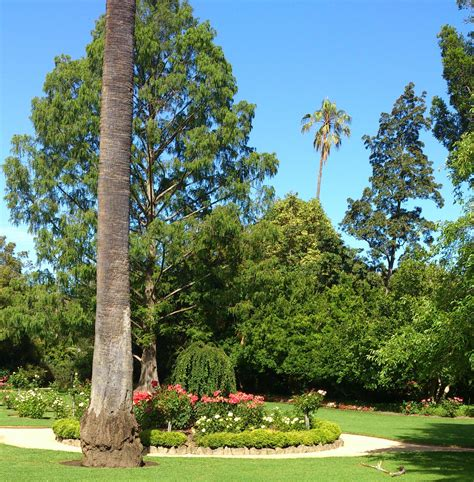 Botanical Gardens Albury Albury Botanic Gardens Albury Wodonga