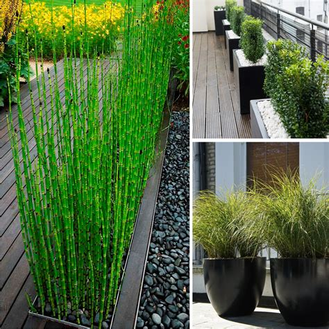 best plants for backyard privacy small space outdoor ideas living outdoors
