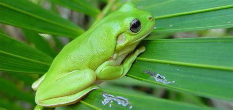 imagenes de rafagas verdes por qu 233 no hay mam 237 feros de color verde