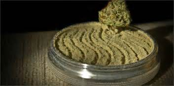 Coffee Grinder Kief These 5 Electric Grinders Will Give You Excellent Results